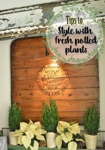 Tips to use Fresh Potted Plants in Styling