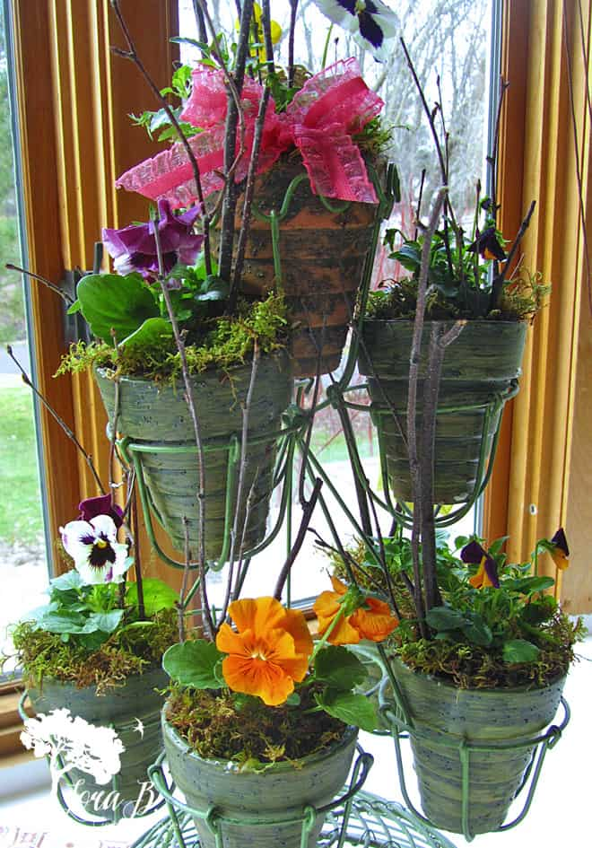 Pansies in pots with added prettiness