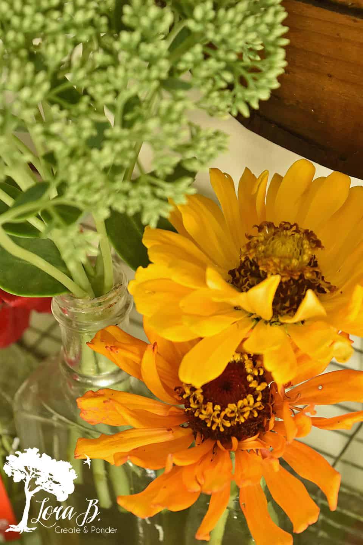 Yellow-toned zinnias