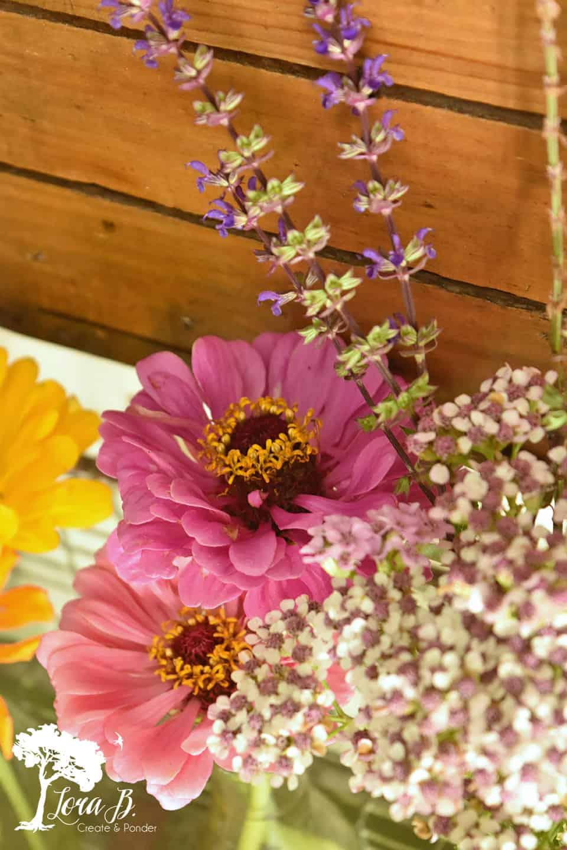 Pink toned zinnias