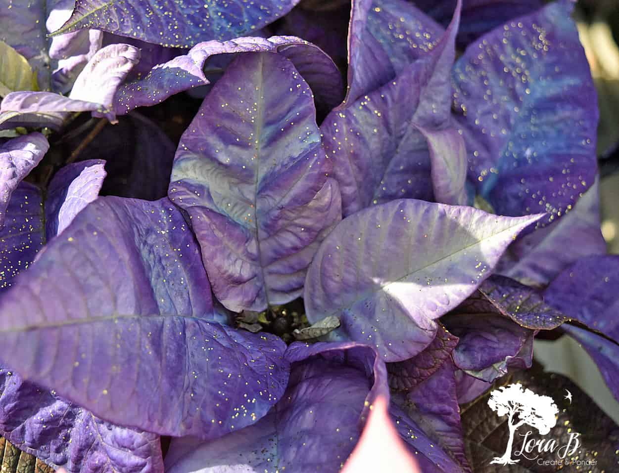 Purple Fantasy painted Poinsettia