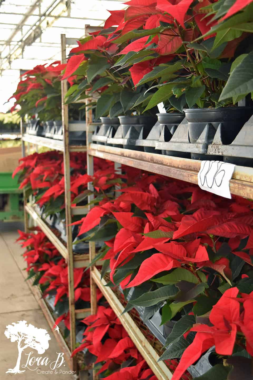 Poinsettias being shipped.