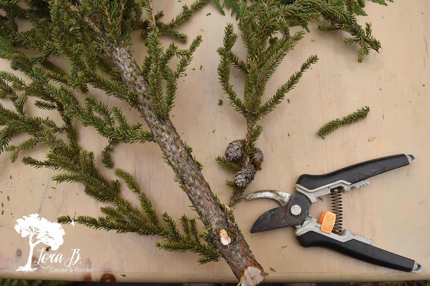 "Snip off bottom 5"" of branches from spruce tips."