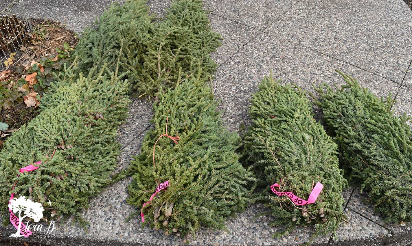 Spruce Tips can be easily arranged yourself for winter decor.