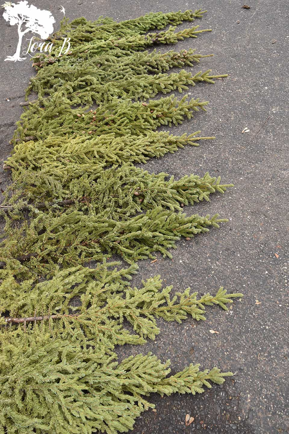 Arrange your spruce tips by size.