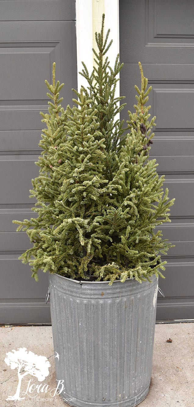 Spruce tips pots for the winter season.