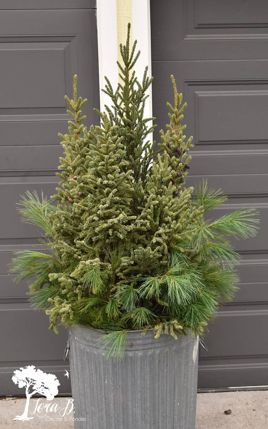 Spruce Tips arranged in an old metal garbage can.