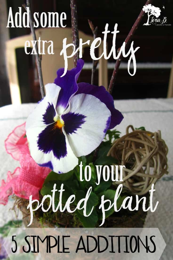 Potted Pansy