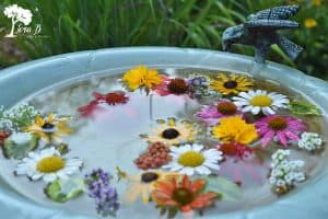 Floating Birdbath Flowers