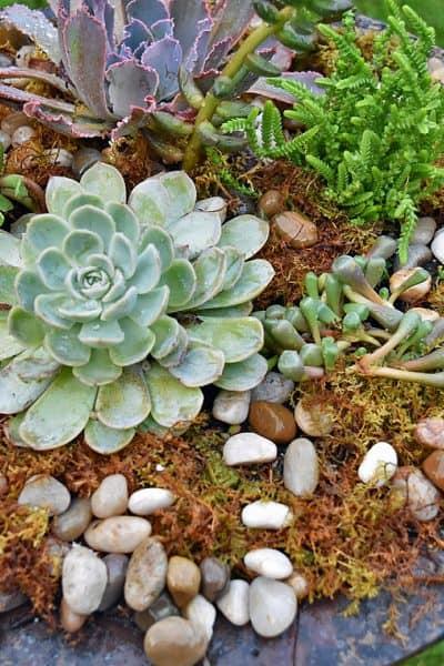 Re-purposed Birdbath as Succulent Planter