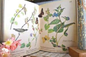 Edith Holden book for decorating