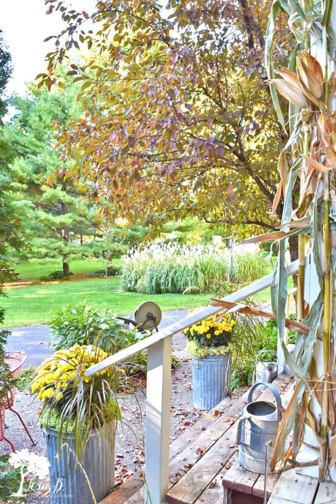 Fall outdoor view.