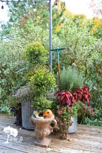 topiary container plants