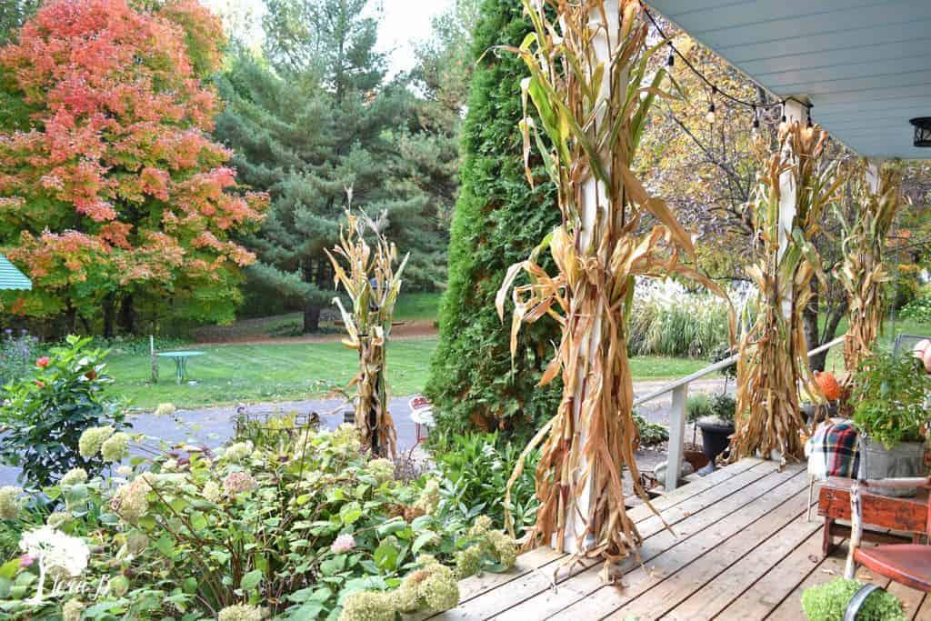 cornstalks on the porch posts