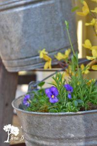 Spring flowers in bucket