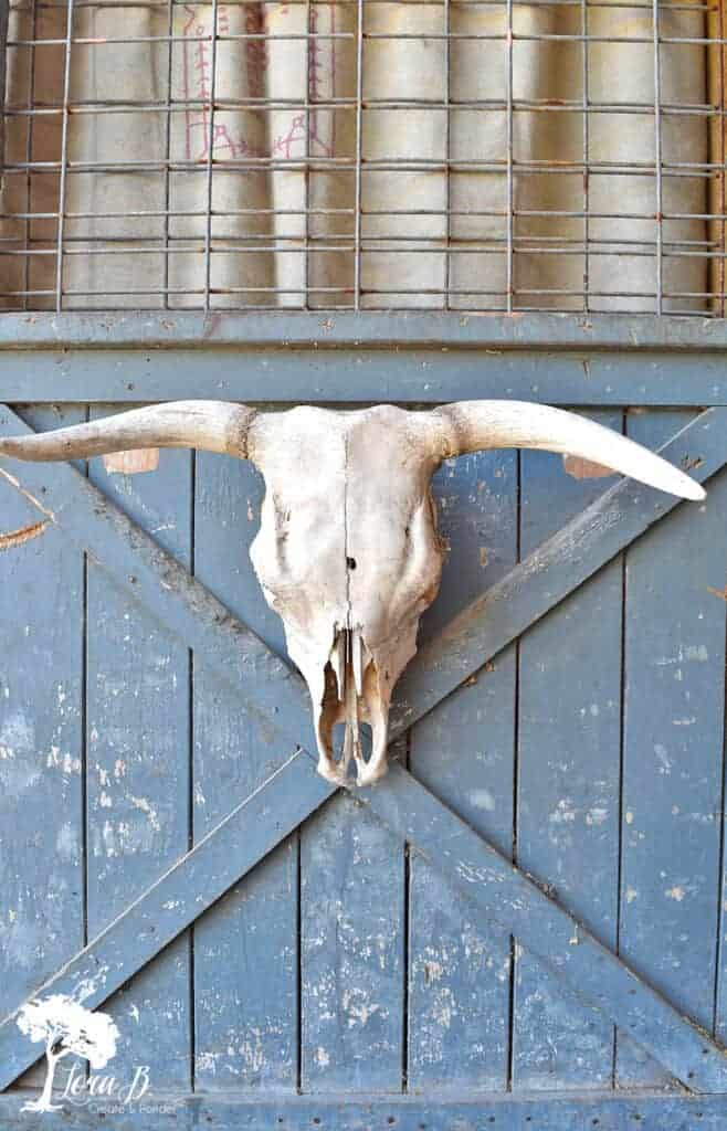 Cattle skull to use for photo styling tips using vintage and fresh flowers.