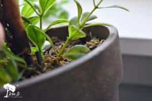 How to Clean Artificial Plants