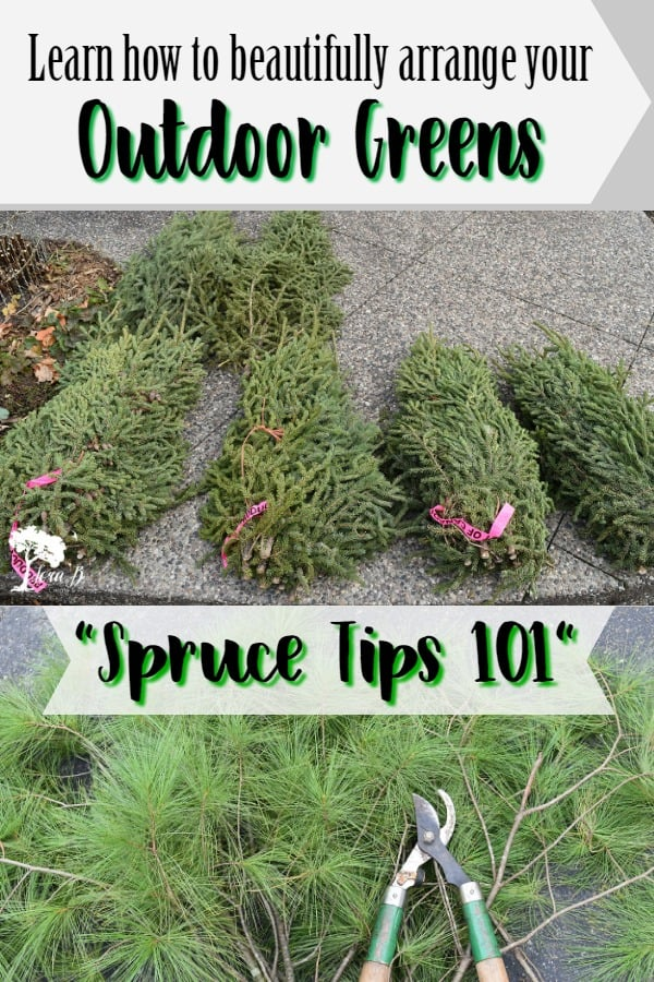 Spruce Tips 101