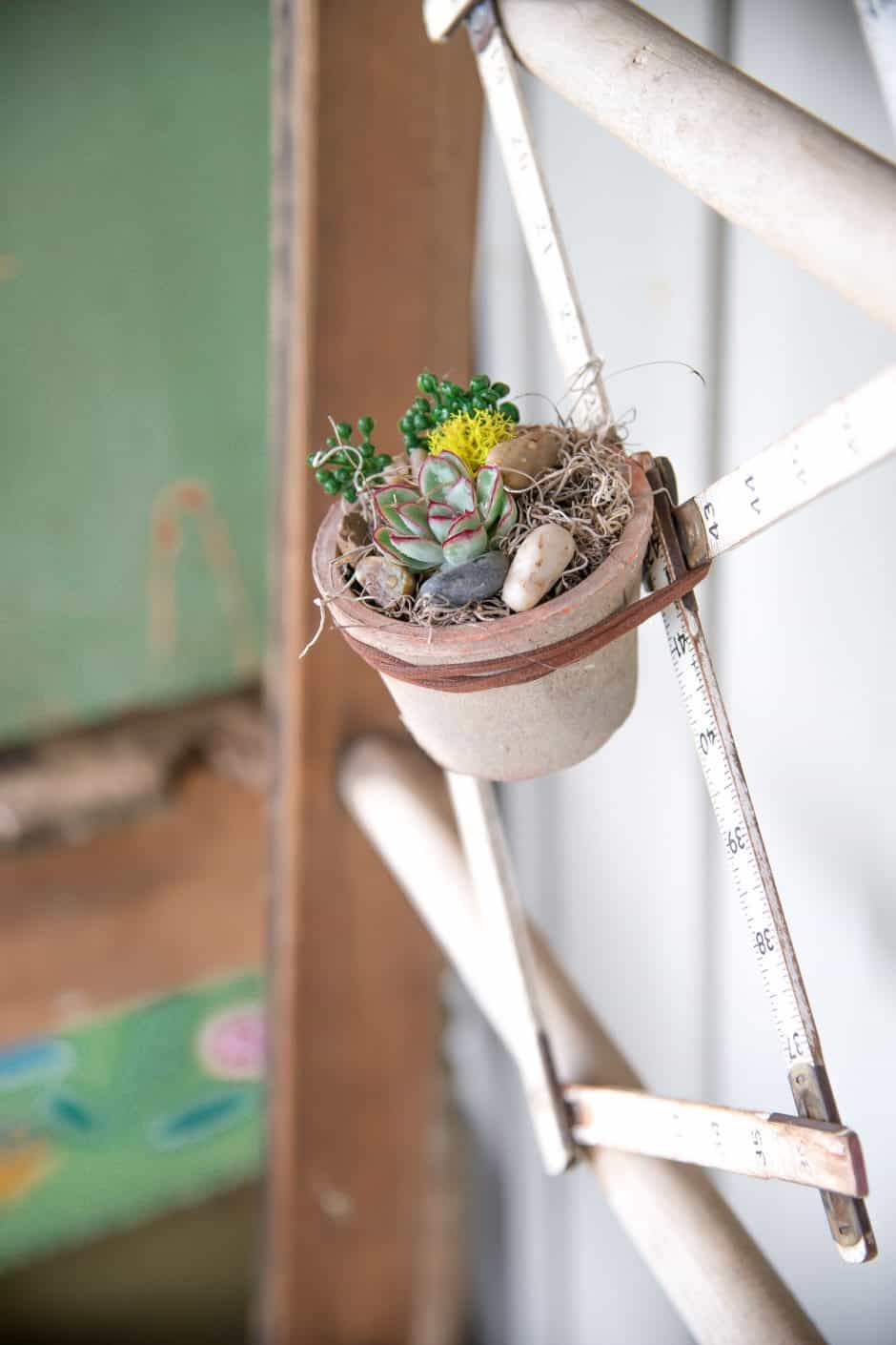 folding ruler succulents